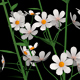 White Flowers - VideoHive Item for Sale