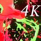 Liquid Beat 4K 03