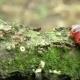 Goat Moth Cossus Cossus Caterpillar, Big Red Worm, Eating Bast - VideoHive Item for Sale