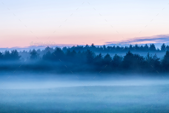 Misty forest - Stock Photo - Images