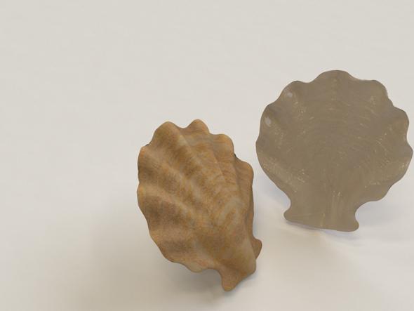 3DOcean Seashell 20659264