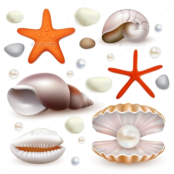 Vector Realistic Seashell and Starfish Icon Set - Organic Objects Objects