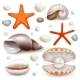 Vector Realistic Seashell and Starfish Icon Set
