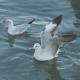 Bird Floating On Sea