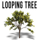 Looping Tree - VideoHive Item for Sale