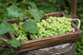Green grapes on an old wooden tray