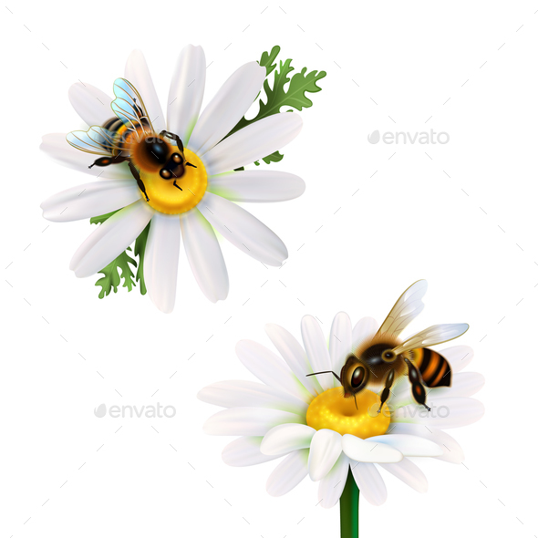 Honey Bees Sitting On Daisy Flowers - Miscellaneous Vectors