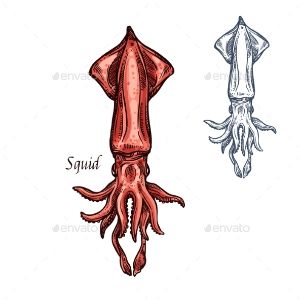 GraphicRiver Squid Sketch Seafood Vector Isolated Icon 20668315