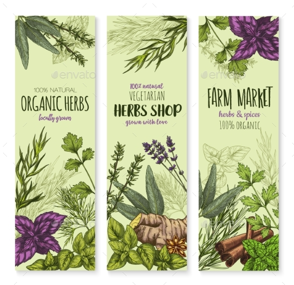 GraphicRiver Spices and Herbs Vector Banners Set 20668342