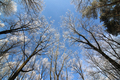 Frosty tree branches - PhotoDune Item for Sale