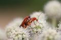 Vermnation - macro of the beetles - PhotoDune Item for Sale