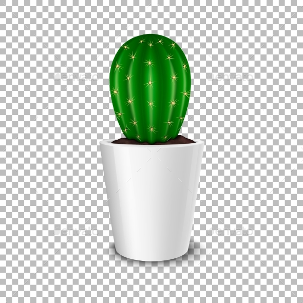 GraphicRiver Realistic Decorative Cactus Plant in White Flower 20670933
