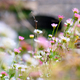 Beautiful flowers field at Bruges, spring season - PhotoDune Item for Sale