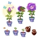 Stages of Growth Magical Flower with Human Face - GraphicRiver Item for Sale