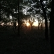 Autumn Forest at Sunset  in the Sun - VideoHive Item for Sale
