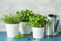 fresh basil and thyme herbs, watering can
