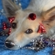 Funny Dog Christmas Background - VideoHive Item for Sale