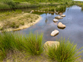 Stepping stones obstacle in pond