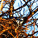 Magpie Nest Renovation 2 - VideoHive Item for Sale