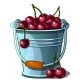 Steel Bucket Full of Ripe Cherries Vector Isolated