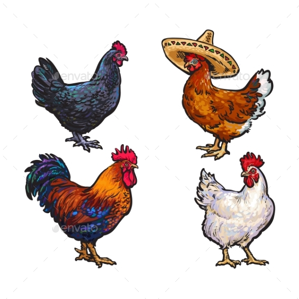 Hand Drawn Chicken Set Isolated - Animals Characters