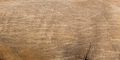 rhino skin texture