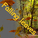Falling Leaves - VideoHive Item for Sale