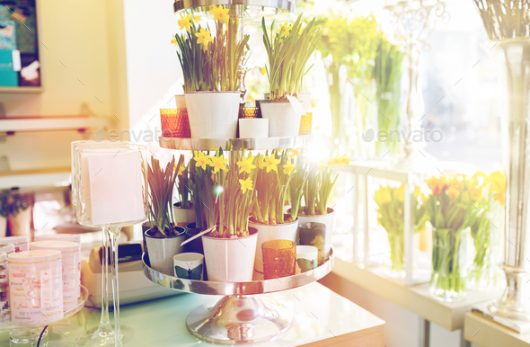 narcissus flowers on stand at flower shop - Stock Photo - Images