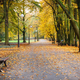 Footpath with bench for relaxation in autumnal park - PhotoDune Item for Sale