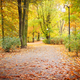 View on trail with colorful leaves in autumnal park - PhotoDune Item for Sale