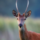 Red deer, a portrait - PhotoDune Item for Sale