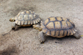 Giant turtles in zoo