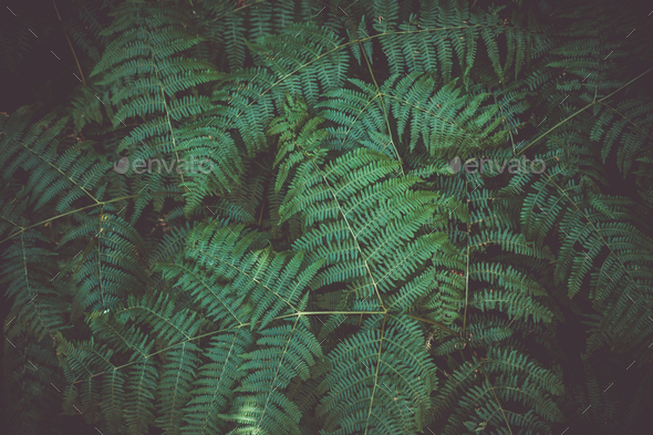 Fern leaf plant background - Stock Photo - Images