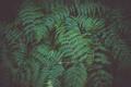 Fern leaf plant background