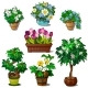 Set of Domestic and Garden Plants in Vase and Pots