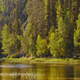 Finland forest at sunset. Pieni karhunkierros trail. Nature background. Horizontal - PhotoDune Item for Sale