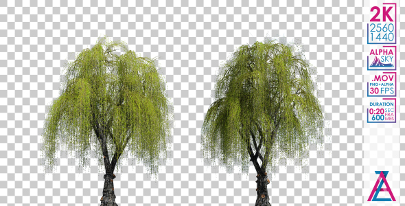 VideoHive Weeping Willow Trees 20689248