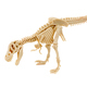 T-Rex dinosaur skeleton  - PhotoDune Item for Sale