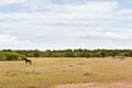 group of herbivore animals in savannah at africa