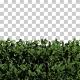 Ivy Hedge Trees