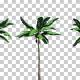 Banana Plant Trees