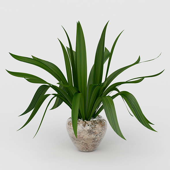 3DOcean Vray Ready Potted Plant 20692228