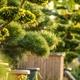 Garden Plants in Wooden Pots - PhotoDune Item for Sale