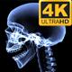 Xray Skeleton Body 4K