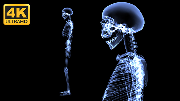 Xray Skeleton Body 4K by skyzip | VideoHive