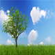 Single Tree Growing - VideoHive Item for Sale