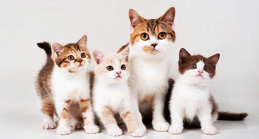 Cat Graphics Design