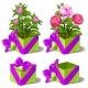 Gift Green Box with Pink Peonies. Vector Flower - GraphicRiver Item for Sale