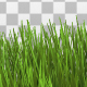 Grass Border - VideoHive Item for Sale