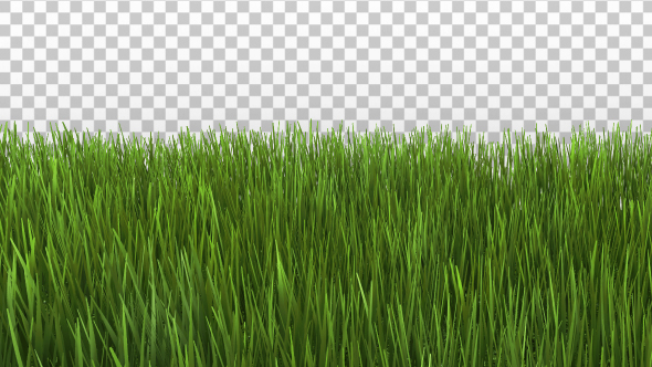 Grass border by se5d videohive for Best grasses for borders